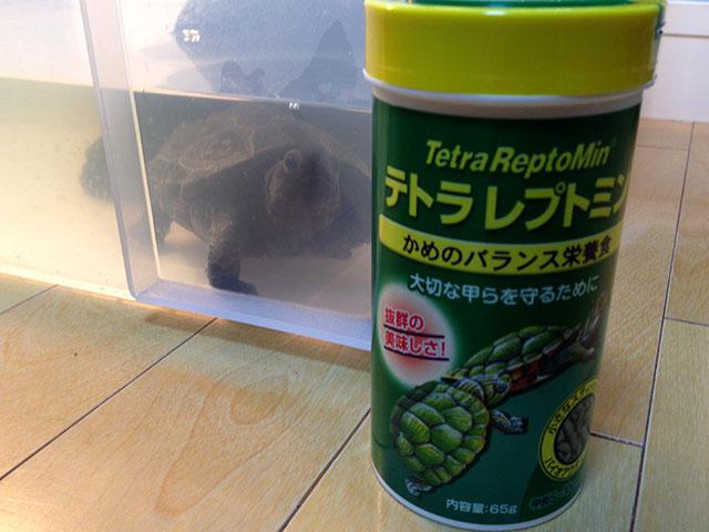クサガメのエサはレプトミン一択