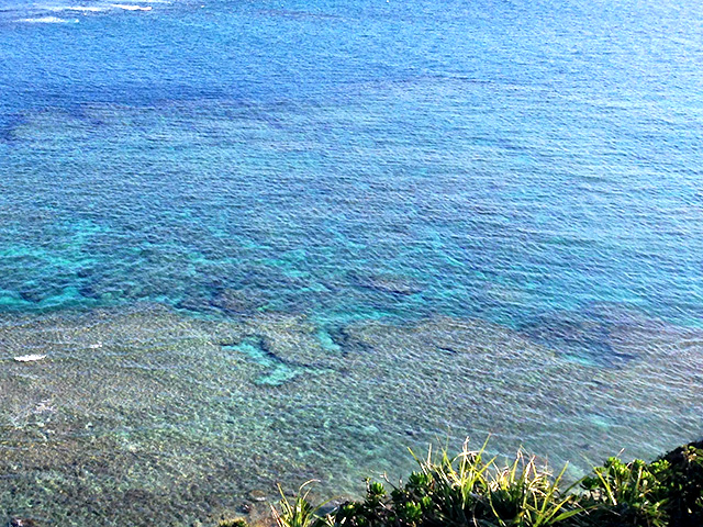 沖縄に花粉症がないなんてウソです!