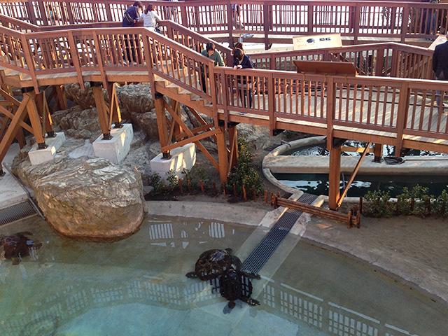 新江ノ島水族館 ウミガメの浜辺