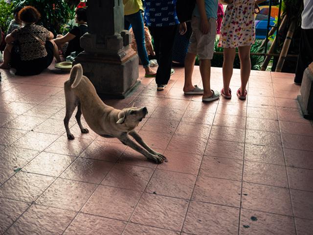 犬が自由すぎるバリ島